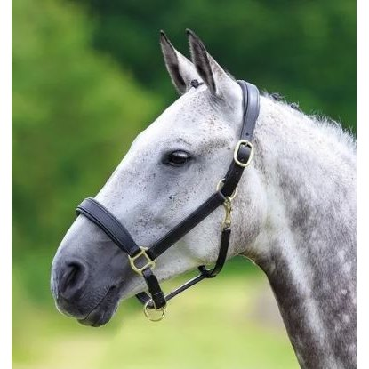 Blenheim Padded Leather Headcollar