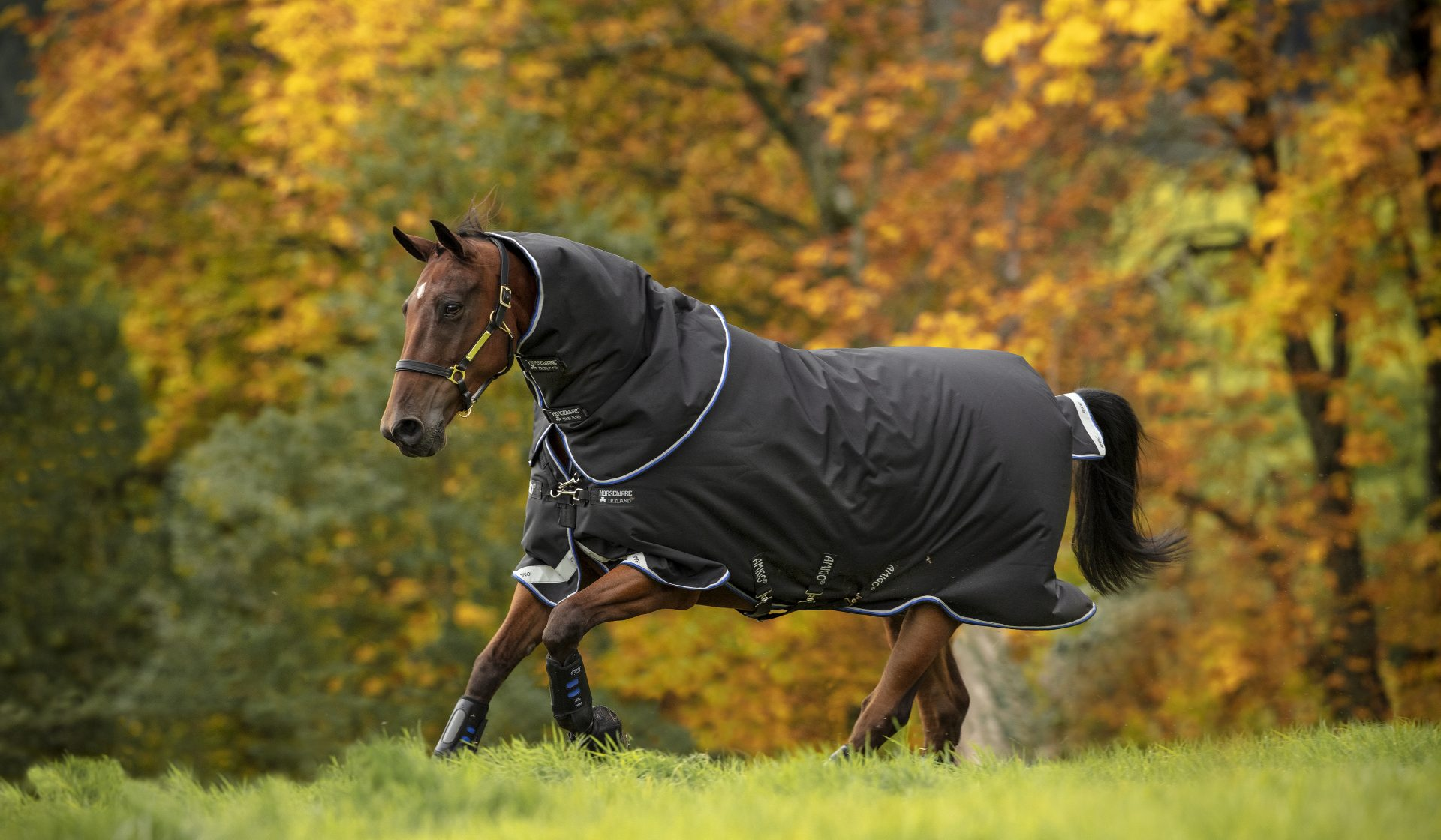 Autumn Winter Turnout Rugs