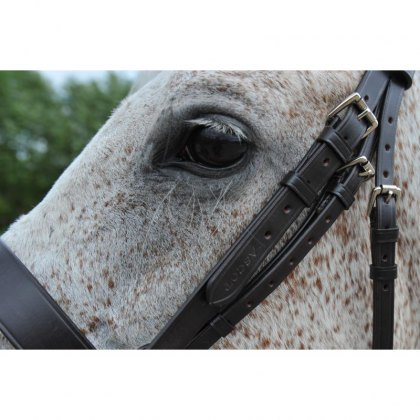 Polo Equipment for the Horse