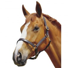 Kincade Triple Stitched Leather Headcollar